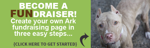 Ark Slides Classy Page