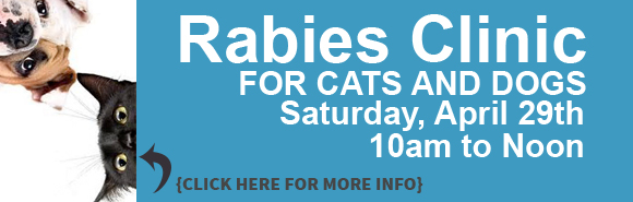 Ark Slides Rabies Clinic 17