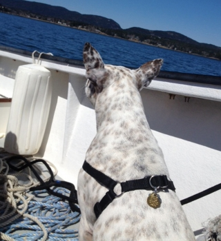 Lollie's first boat ride